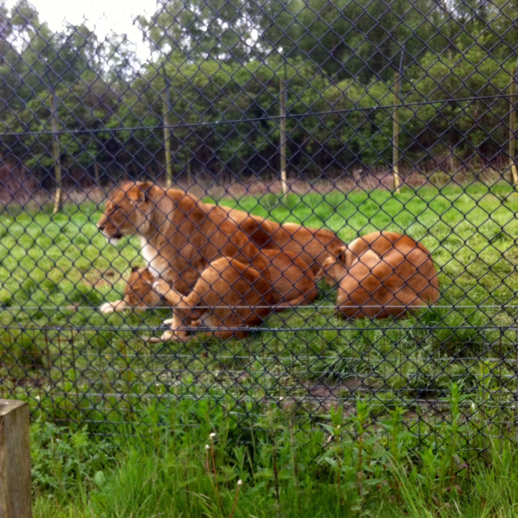 Knowsley safari park review