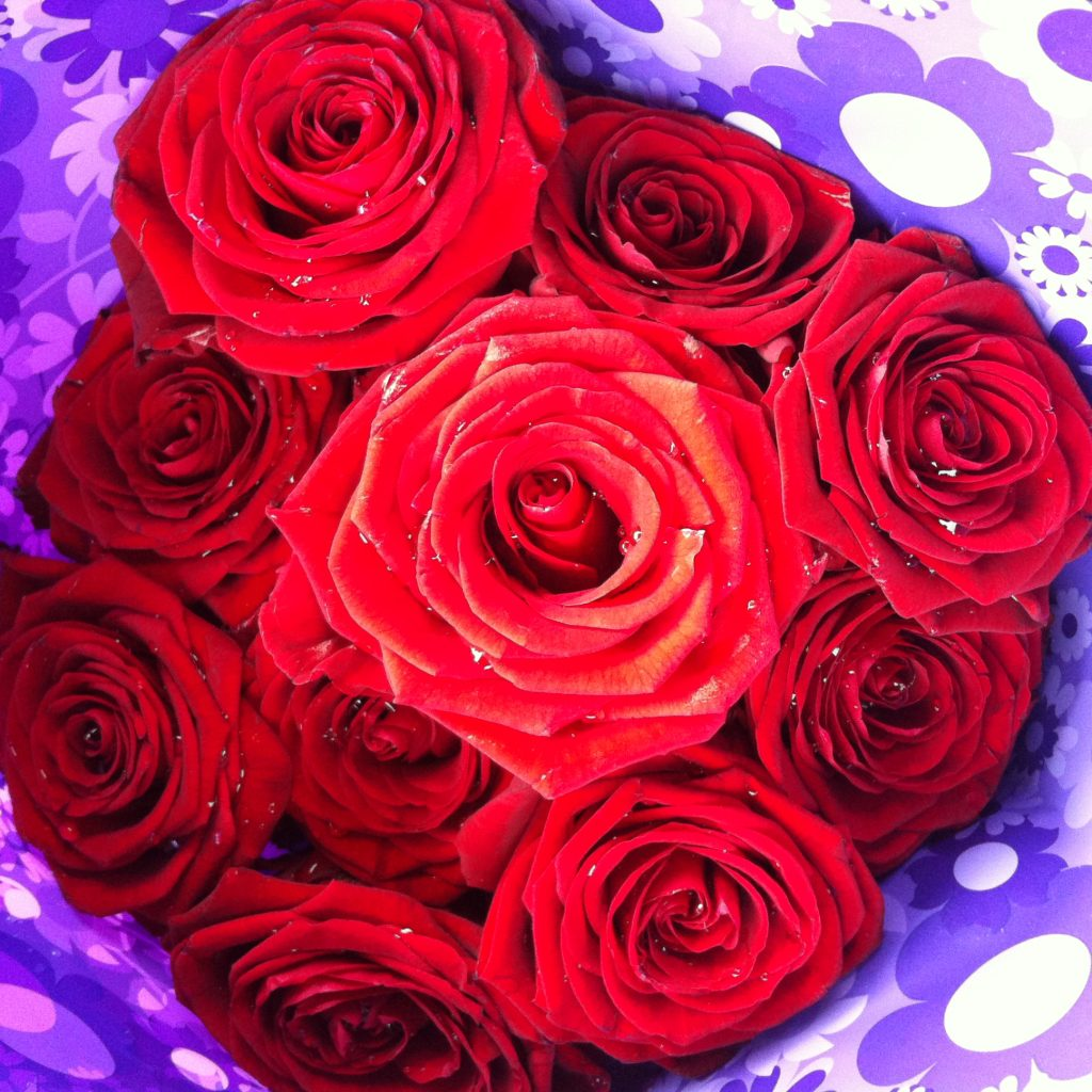 Bouquet of red roses wrapped in purple sellophane