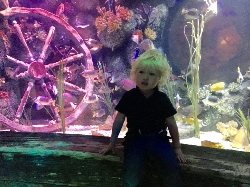 Sea Life Manchester review Lucas is sat on a ledge in front of a tank of fish