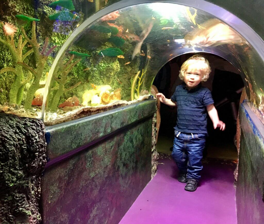 Sea Life Manchester review Lucas is under the opening of a tunnel to walk underneath the fish tank