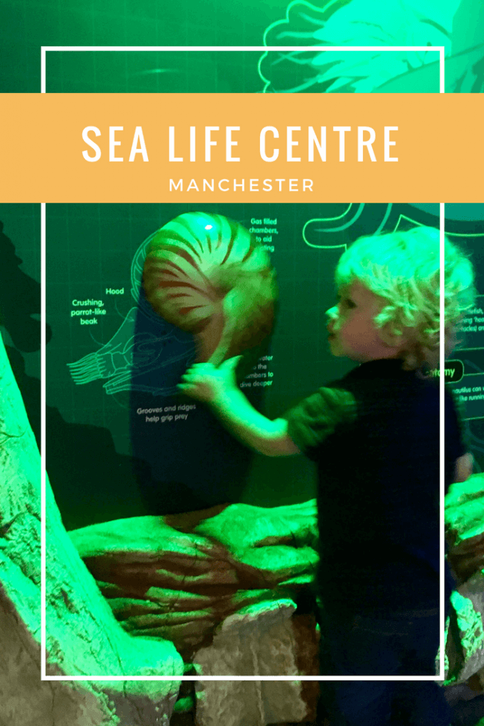 #sealifecentre #sealife #aquarium #traffordcentre #manchester