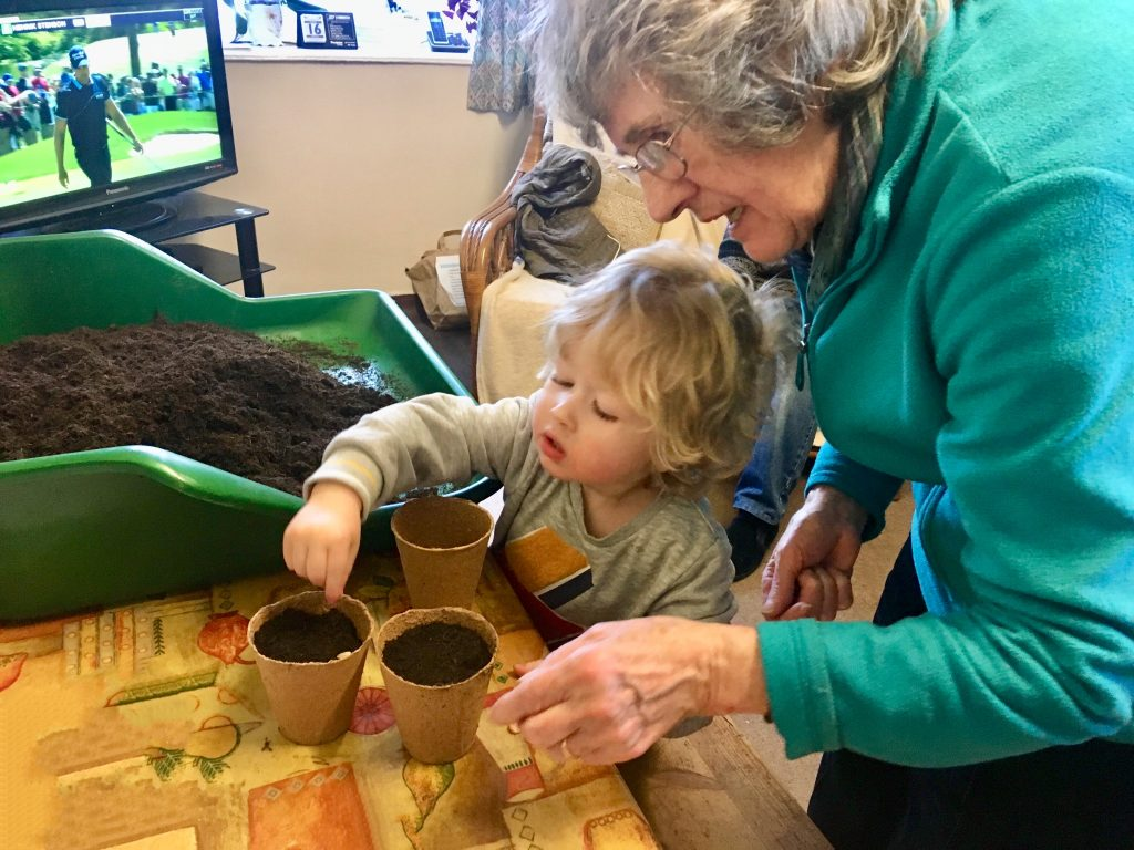 Planting sunflower seeds. Lucas is sat at a table placing sunflower seeds into small cardboard pots of soil with Great Grandma
