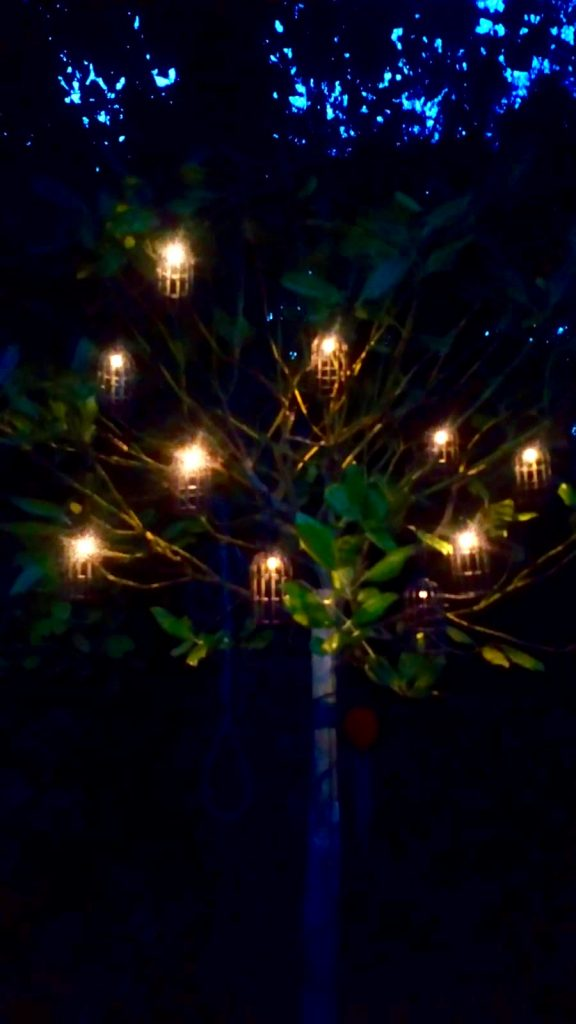 Wild Night Out 2018 A tree in the dark with birdcage shaped solar lights lit up