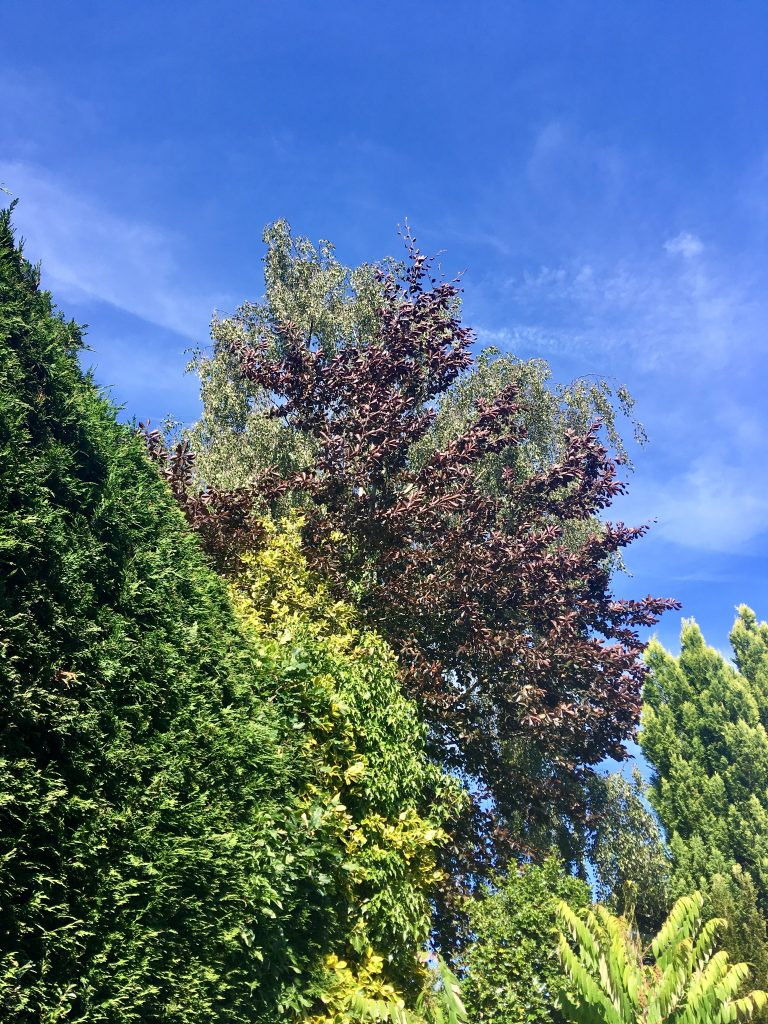 Wild Night Out 2018 A picture of the clear blue sky behind various trees