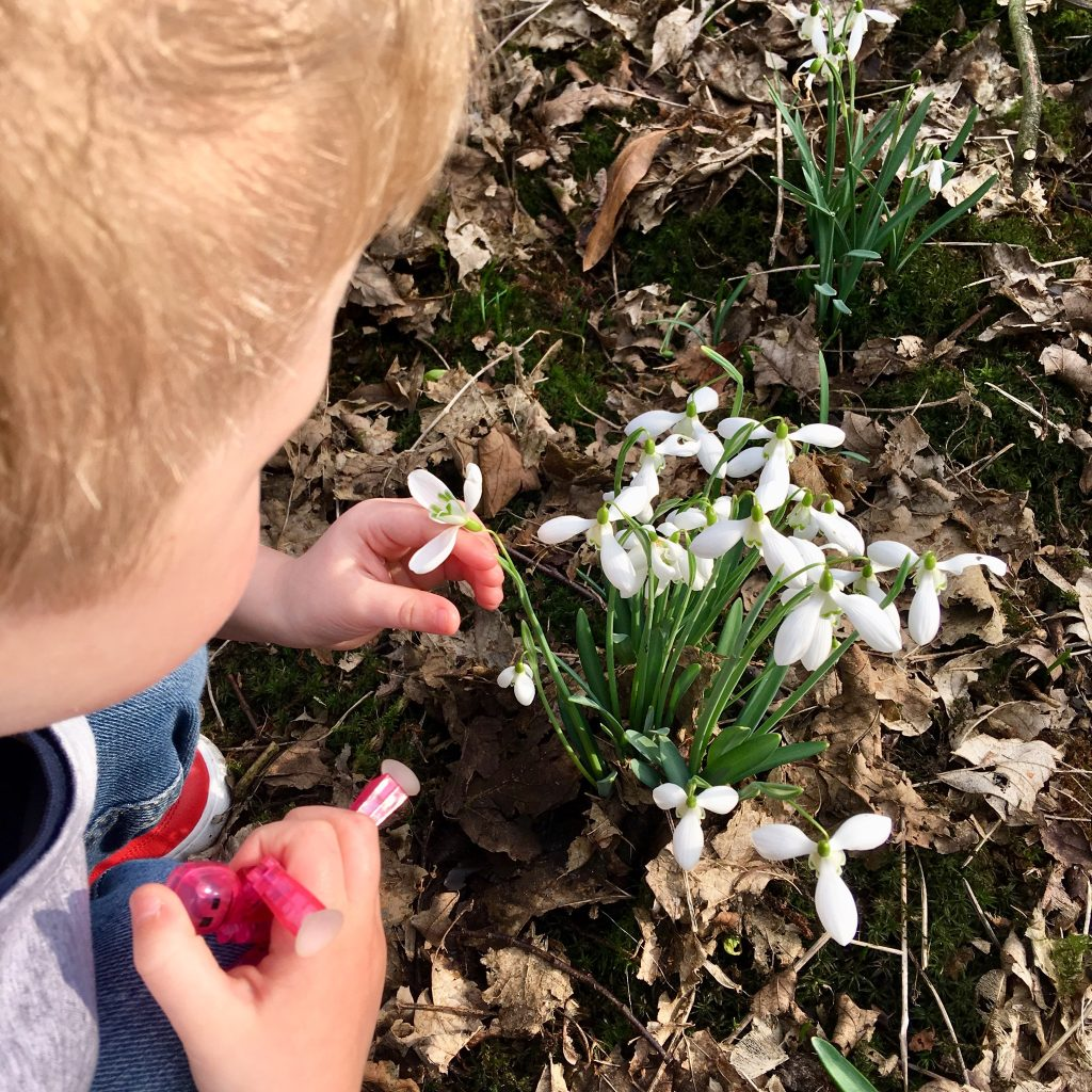 Bank Hall Gardens, Bretherton. Lucas is bent down gently touching the snowdrops