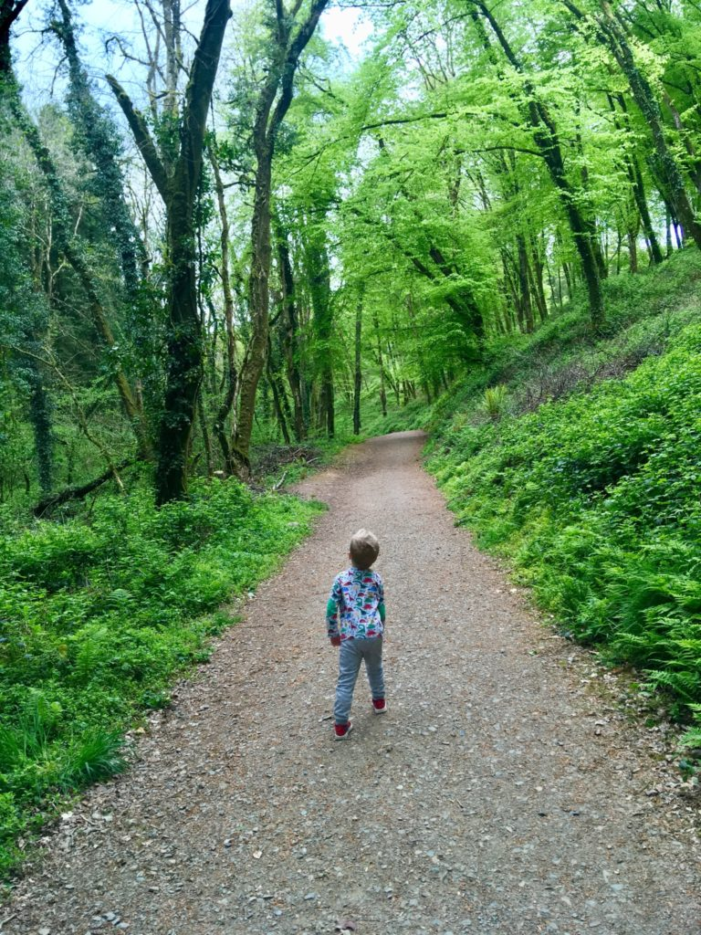 Lucas walking on a path with trees lined both sides