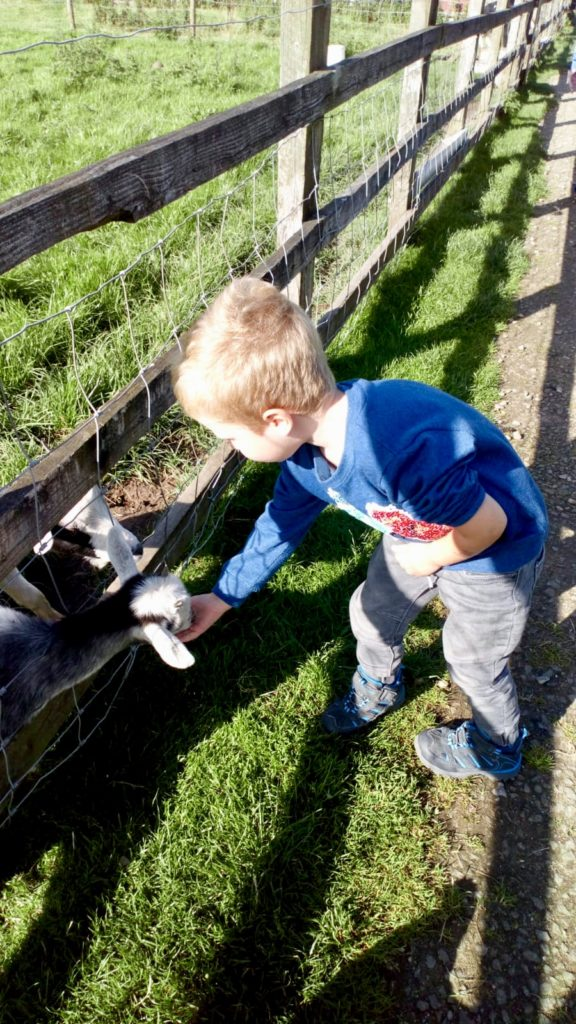 Lucas feeding a goat as cedar farm