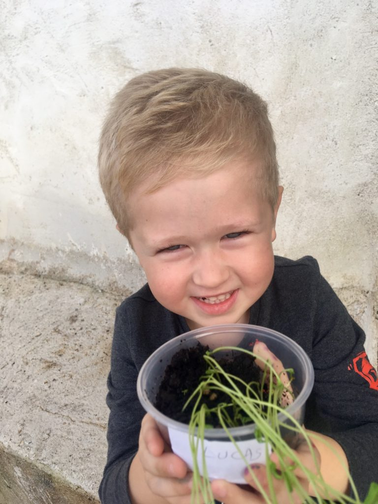 Lucas holding the plant up that he grew at school