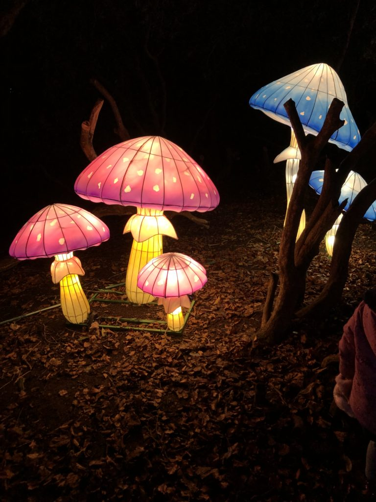 Toadstools at lightopia manchester