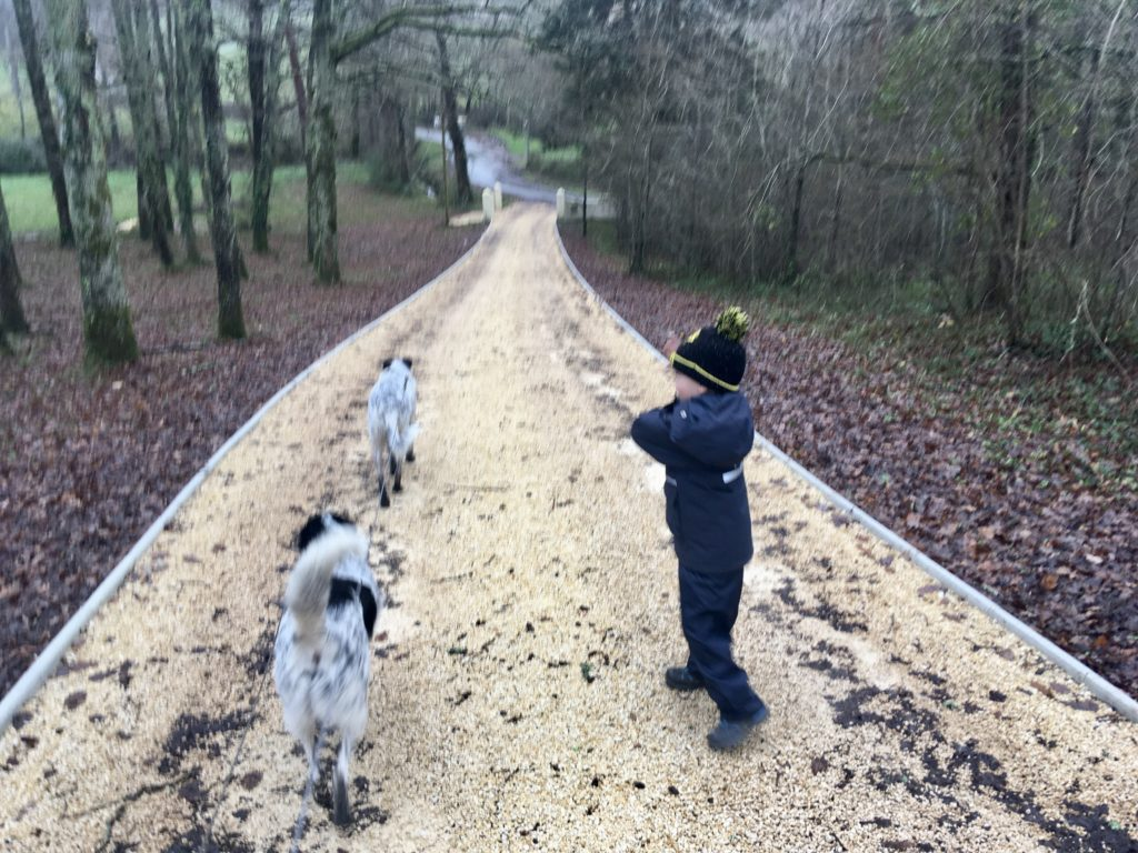 Lucas is walking down a long pebbled driveway where we are house sitting. He is wearing waterproofs and 2 black and white collie dogs are walking beside him
