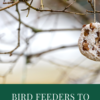 Bird feeders to make with children