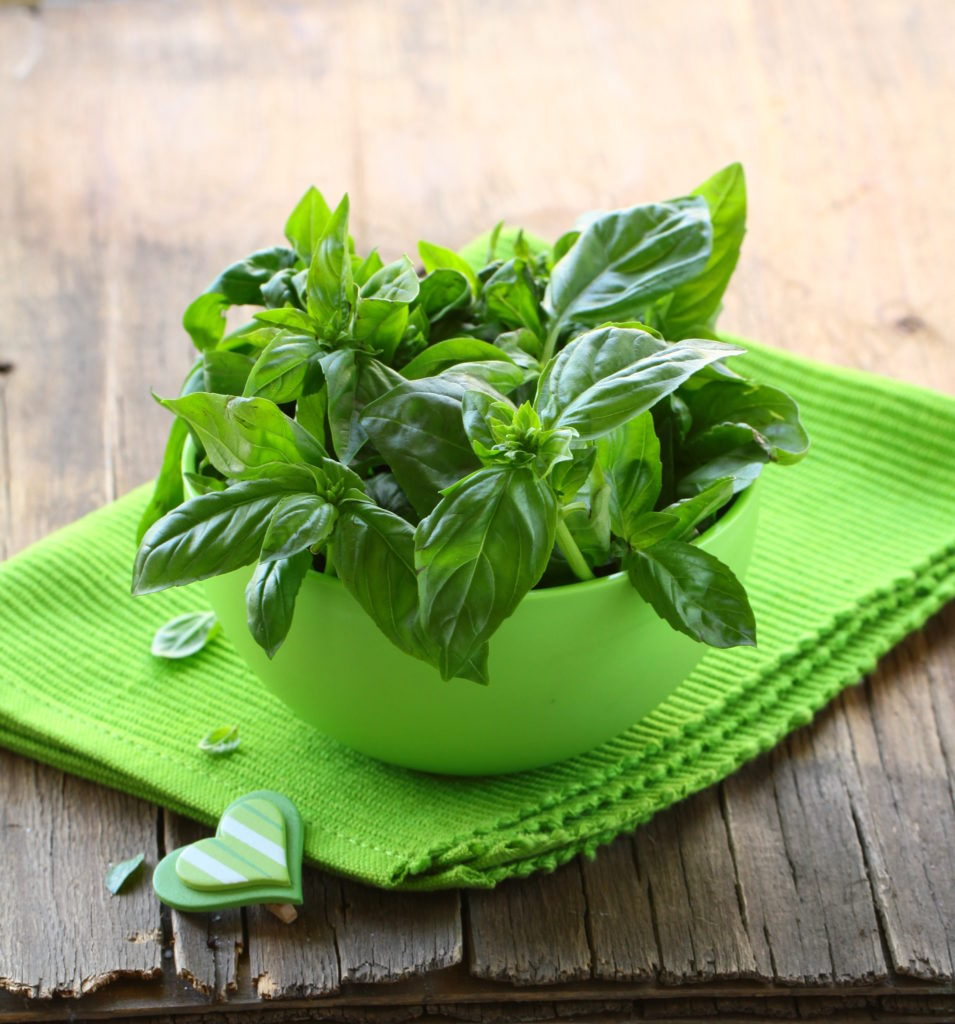 fresh basil leaves in a green bowl