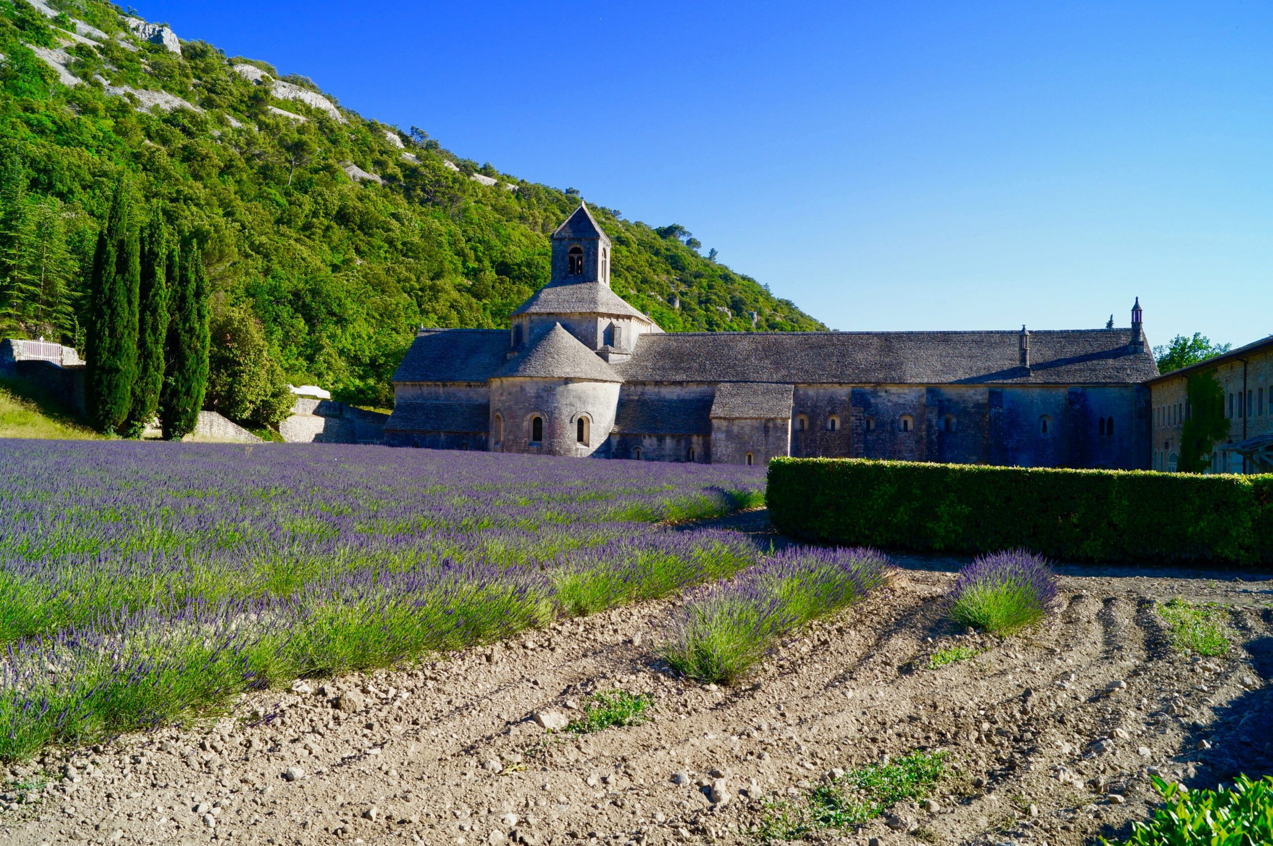 a french chateau and some lavender fields in provence south france