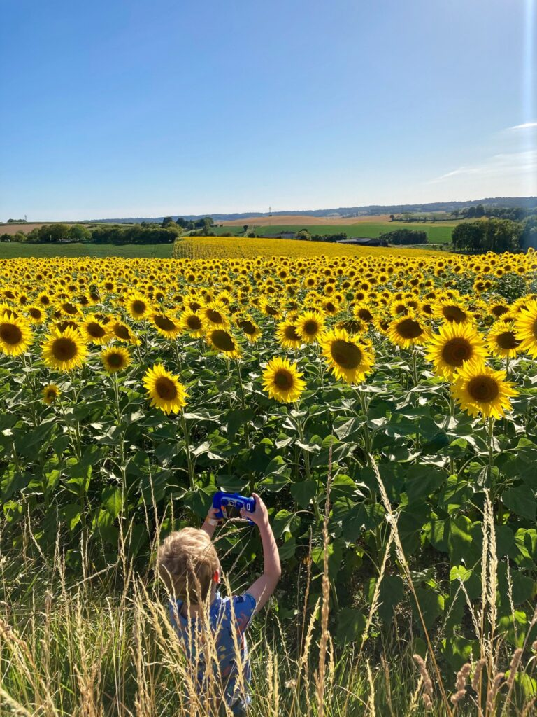 Lucas taking photos of the sunflowers field with his blue vetch kidizoom camera