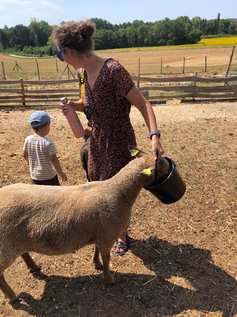 I'm feeding a sheep, the sheep has its head in the bucket of food. I'm at Le Parc Sauvage in La Tour Blanche