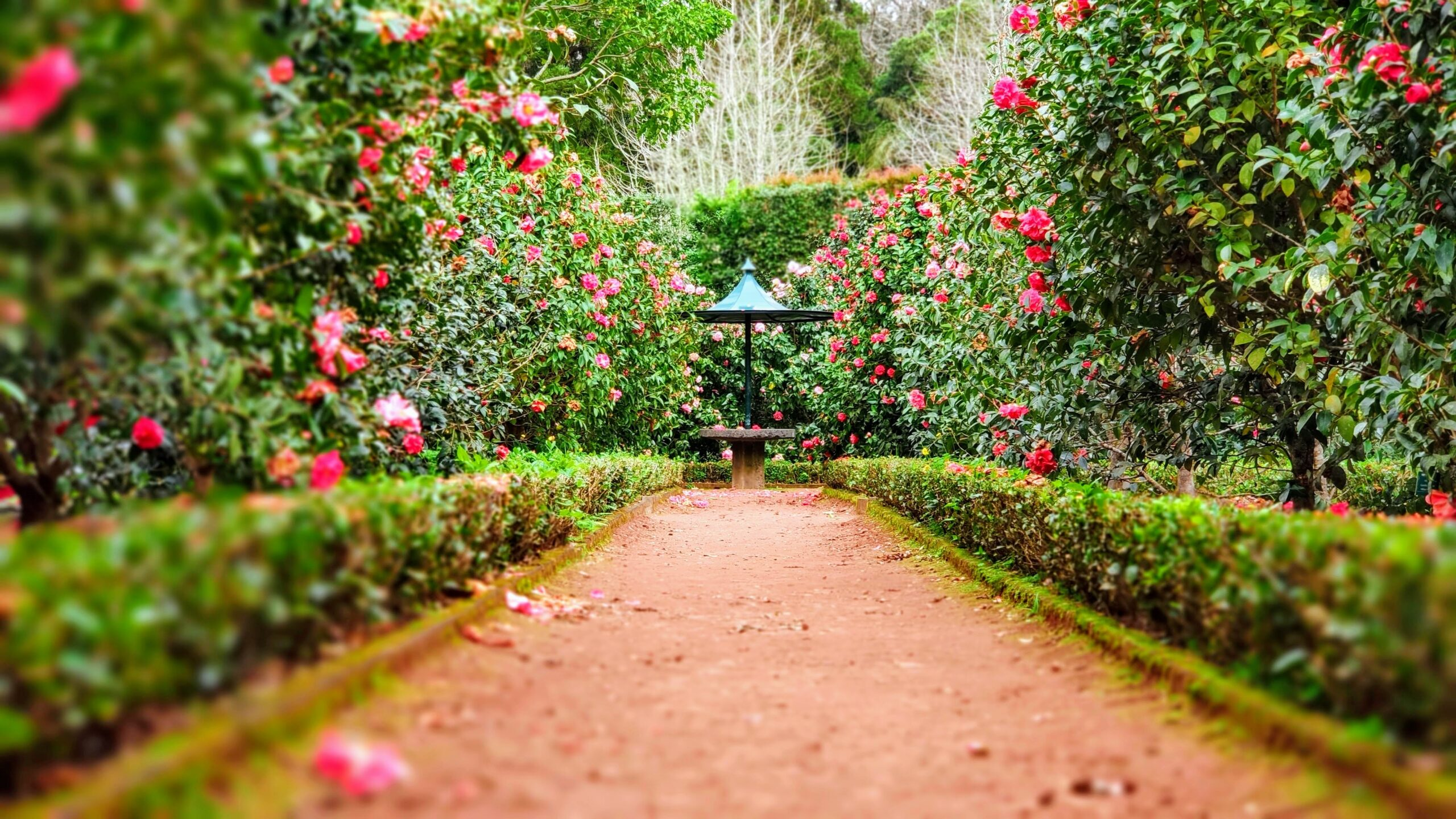 a garden with a path leading to a water feature. The path is lined with green foliage and pink flowers