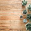 wooden floor with succulent plants on in plant pots, the photo is taken from above