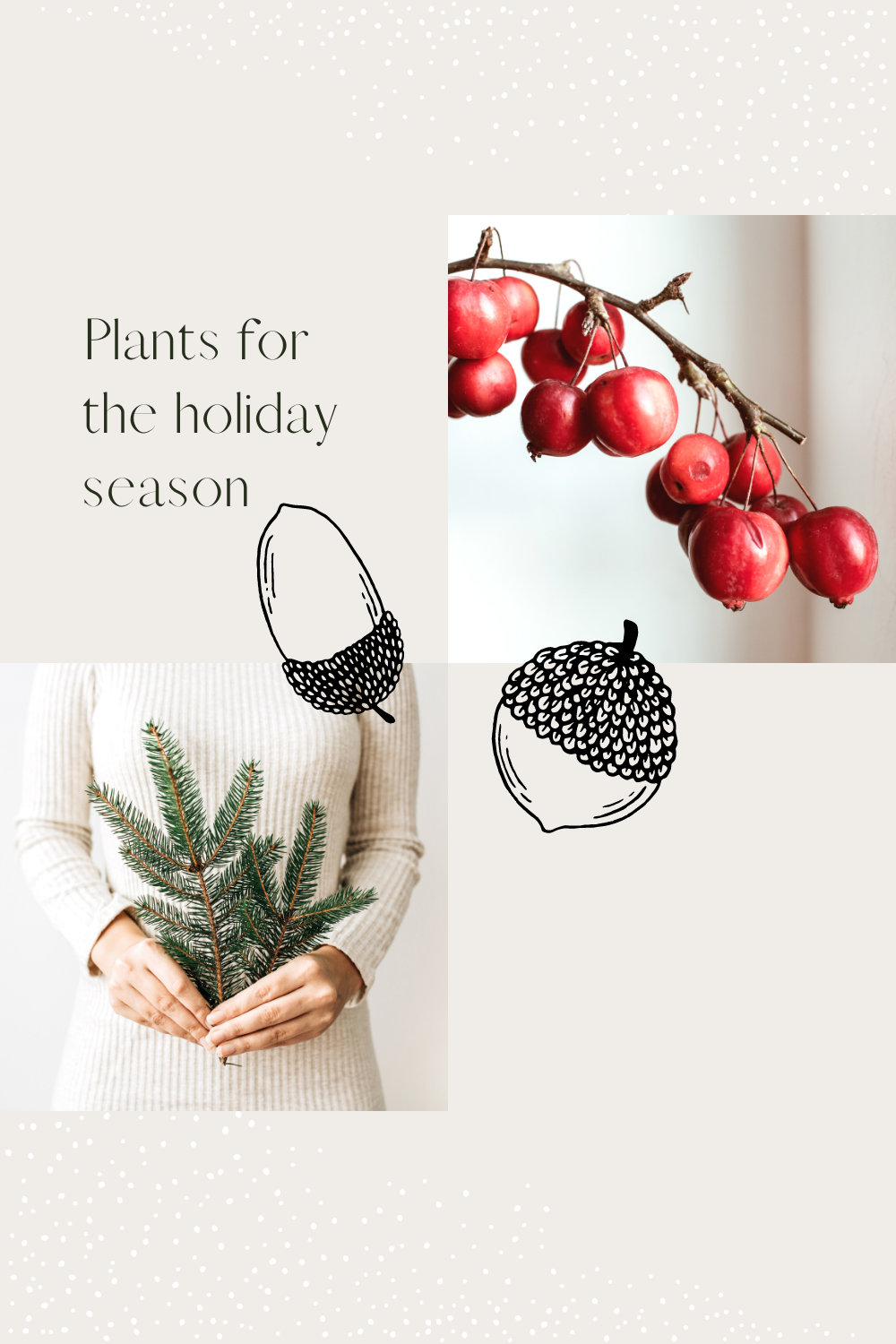 Plants for the holiday season that are perfect for Christmas decorations from red and white amaryllis, holiday cacti, poinsettia & evergreens