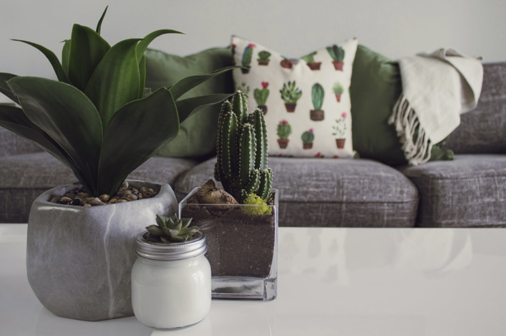 Succulent and cacti on a table in the front of the shot and behind is a grey sofa