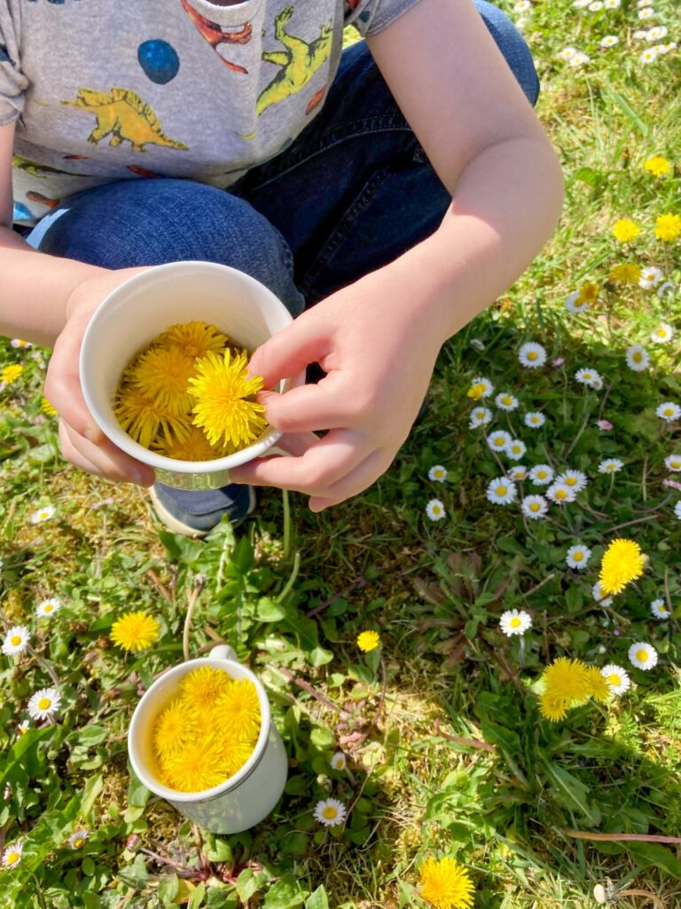 Lucas picking dandelions in the garden and putting into cups